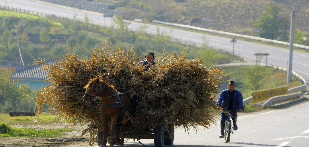 2 года за 86 млн леев обрабатываются данные переписи населения Молдовы за 2014 год