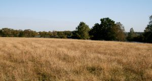 Беларусь сделает публичной информацию о свободных земельных участках