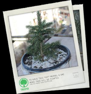 Мобильное приложение Treepex