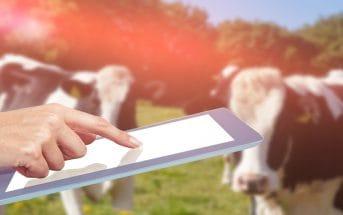 Беларусь меняет профиль: вместо молока и картошки – программы и ИТ
