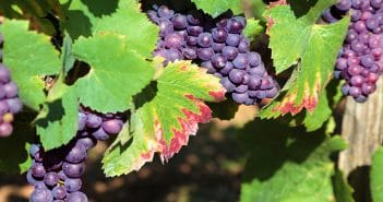 В Молдове стартуют 3 технологичных проекта в области виноделия стоимостью более 1 млн долларов США